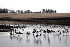 A pond being filled this winter to provide irrigation for about 300 acres of black soil, expected yield benefit is 30 – 50 bushels per acre.